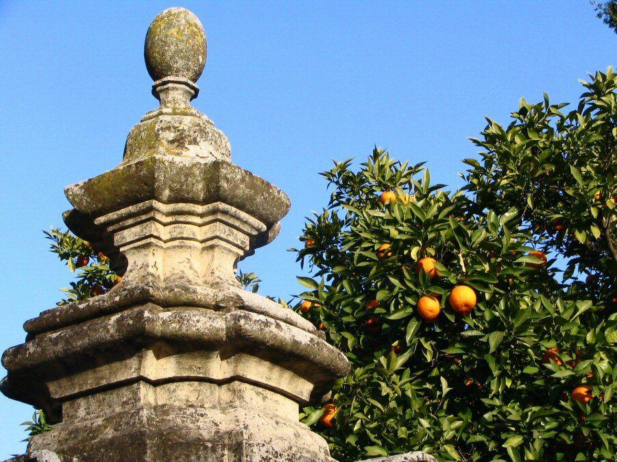 PATIO DE LOS NARANJOS Guía de la Mezquita de Córdoba